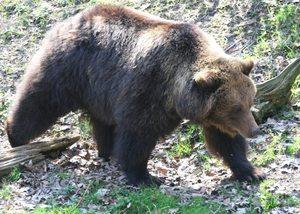 Björna