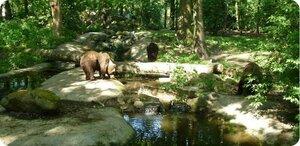 Bears in Mind Team