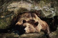 Beregoeie slaapchallenge op 28 november!