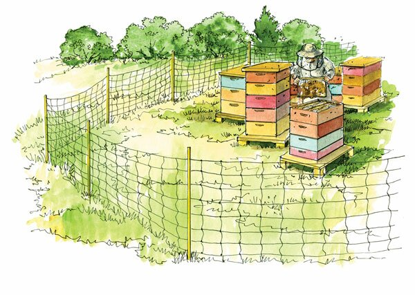 Beren en bijen Slowakije
